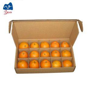 dragon fruit cardboard box-1